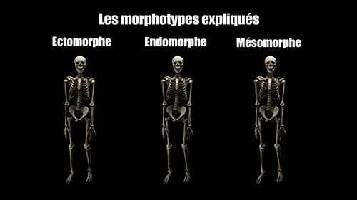 comparaison entre els différents morphotypes en musculation